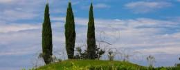 Vigne Museum imagecredits © foto Luigi Vitale dettaglio