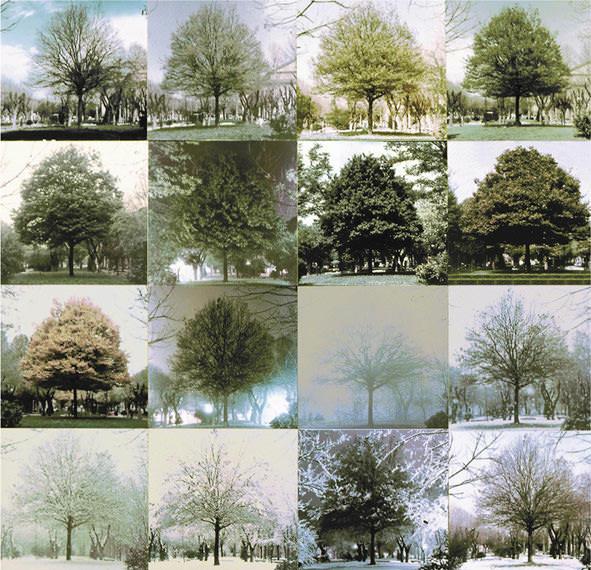 C. Leonardi, Carpinus Betulus, 1962-1963. Courtesy Archivio Architetto Cesare Leonardi